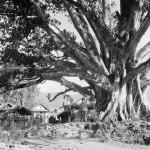 106 - Makalu, Strom na cestě (60x60)