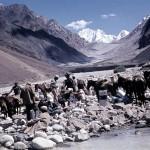 Hindúkuš-Afghánistán, Karavana po přebrodění ledovcového potoka |  Hindu Kush-Afghanistan  Caravan after crossing a glacial stream  (1965)