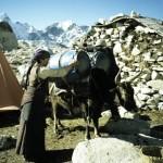 70 - Mt. Everest, Nakládání zavazadel na yaka (60x40)